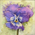 pansy by Melody Greenlief