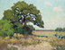 South Texas Oak 11x14 oiloncanvas by Noe Perez